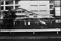 中野-21 - Camellia-shige Gallery 2