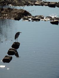 『木曽川水園の大滝と鳥達~』 - 自然風の自然風だより