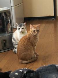 美人姉妹( *´艸`) - 愛犬家の猫日記