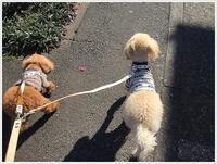 北風と太陽、今日は太陽に軍配!!かな~さくら、大、散歩も気持ち良かったね。 - さくらおばちゃんの趣味悠遊