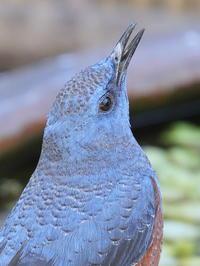 午後の常連さん - TACOSの野鳥日記