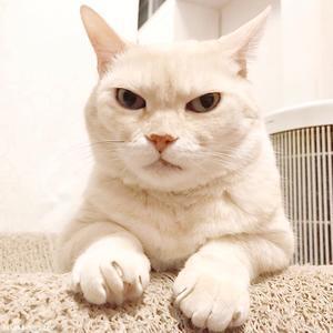 まつりだまつりだ - 賃貸ネコ暮らし|賃貸住宅でネコを室内飼いする工夫