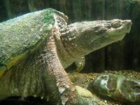 初夏の水生物館~ミヤコタナゴの産卵とミズグモBABY再び!(井の頭自然文化園) - 続々・動物園ありマス。