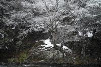 1℃で雪・・・2㎝の新雪で積雪15㎝に朽木小川・気象台より - 朽木小川・気象台より、高島市・針畑・くつきの季節便りを!