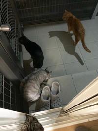 夜の猫パト - にゃんず日記