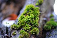 樹木を覆う苔 - 晴れ時々そよ風