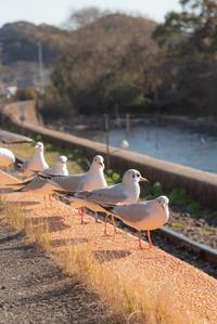 カモメ*鉄道 7 - 気ままにお散歩