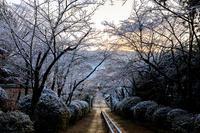 雪の京都宗忠神社の雪の華トンネル - 花景色-K.W.C. PhotoBlog