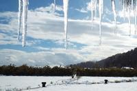 雪の中 - 浜千鳥写真館