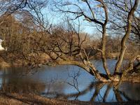 『河跡湖公園のヌートリアとシメ達と風景~』 - 自然風の自然風だより