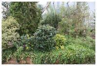 1月限定サービス実施中です! - natu     * 素敵なナチュラルガーデンから~*     福岡で庭造り、外構工事(エクステリア)をしてます