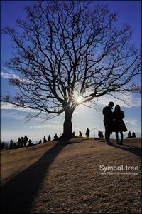 山の上の大きな木 - すずちゃんのカメラ!かめら!camera!