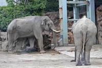 初夏の上野動物園~アジアゾウの同居とホッキョクグマの給餌 - 続々・動物園ありマス。