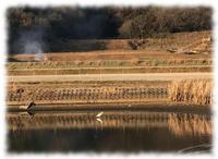 ため池と昼の月 - マリカの野草画帖