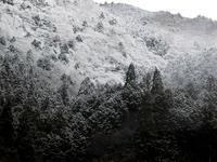曇りで0.1℃の朝朽木小川・気象台より - 朽木小川・気象台より、高島市・針畑・くつきの季節便りを!