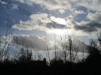 雲の書初め et 私の書初め - フランス Bons vivants des marais
