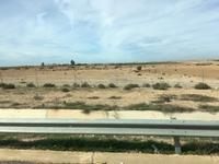 マラケシュからアガディールまで、車で220km。途中で、アルガンの木をじっくり観察します! - せっかく行く海外旅行のために