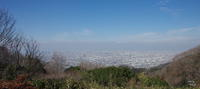八尾市神立玉祖神社の水仙 - ぶらり記録:2 奈良・大阪・・・