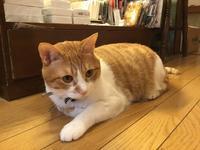 即興!楽描き!猫描き会 vol 7のお知らせ - 神楽坂 路地裏 ふくねこ堂