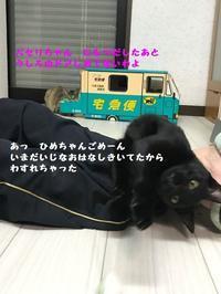 あら大変(笑) - 八幡地域猫を考える会