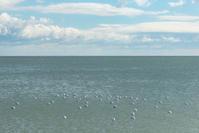 空と海と雲と、そしてカモメ。。。 - 気ままにお散歩