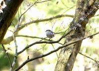 まるで苦行のような、高尾の山道・・・高尾/日野 - 浅川野鳥散歩