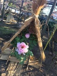 帯状疱疹。。 - 『一日一畫』 日本画家池上紘子