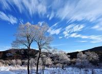 冬晴れ 2 - 源爺の写真館