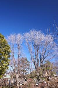 今日の空は蒼穹 - さんじゃらっと☆blog2