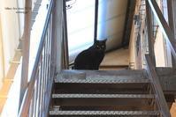 番猫さん - Bamboobooのひとりごと