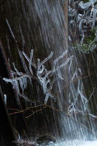 Cold winter flowers - デジタルで見ていた風景