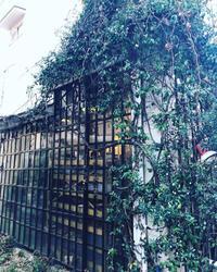 中目黒にある、ラヴィアラカンパーニュのオーナーのシルバさん - 黒豆日記