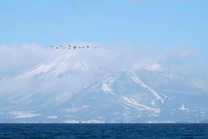 白鳥舞う猪苗代湖!! 2019・01・19 - 常陸のT's BLOG