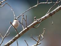 コラボに期待 - ゆるゆる野鳥観察日記