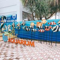水族館AQUARIUM - プーケットのダイビングショップ ナイスダイブプーケットのブログ