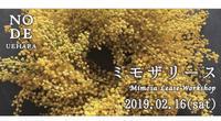 2月16日(土)ミモザリースワークショップ - harihariの道草日記