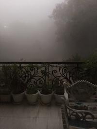 霧の朝! - Blue Lotus