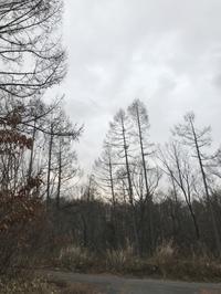 雪がふってきた - 木洩れ日の森から