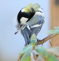 平凡ならざるものたち - TACOSの野鳥日記