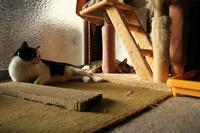 西陽・Part4 - Black Cat Moan