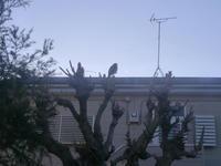 自宅で猛禽 - (鳥撮)ハタ坊:PENTAX k-3、k-5で撮った写真を載せていきますので、ヨロシクですm(_ _)m