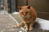 灯台猫たち2019.01.18 - ちわりくんのありふれた毎日II