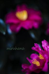 蕊のちから。 - MIRU'S PHOTO