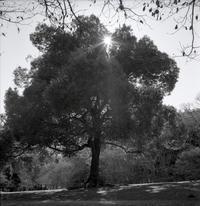 ある公園の木 - またいつか旅に出る