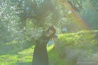 オリーブの森で。 - Yuruyuru Photograph