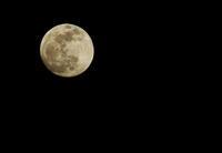 2019年1月20日の月(明日は満月) - 蓮華寺池の隣5