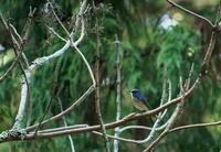 野鳥 - 蓮華寺池の隣5