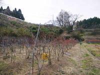 無農薬栽培のフレッシュブルーベリー冬の様子と惜しまぬ手間ひま - FLCパートナーズストア