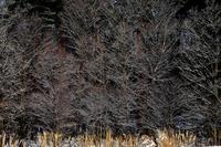 冬木立 2 - 源爺の写真館