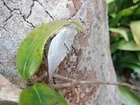 冬の蝶… - 侘助つれづれ